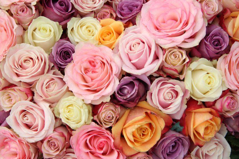 Жіночий відрив «Роза Бар»  — вечірки 7 та 8 березня